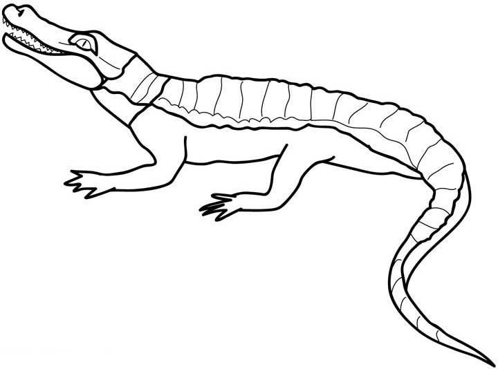 printable coloring pages crocodile - photo #16