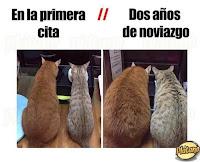 pareja de gatos engordando humor
