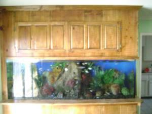 Giant Aquariums: December 2011