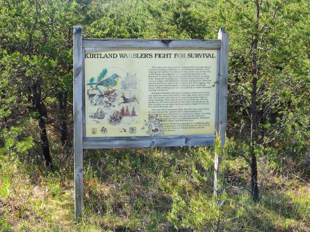 Kirtland's Warbler Sign - Grayling, Michigan, USA