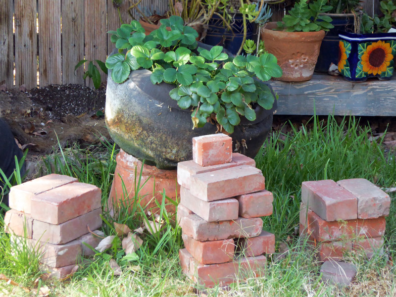 Strawberry plant with bricks