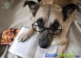 cão ler esperto culto email divertido rir