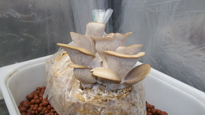 Mushroom Spawn Manufacturers in Hyderabad