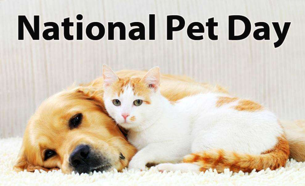 National Love Your Pet Day Wishes Awesome Images, Pictures, Photos, Wallpapers