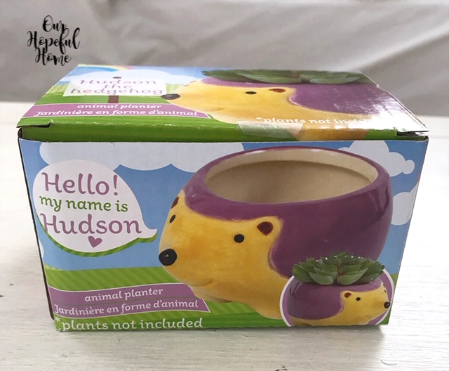 animal planter purple hedgehog box Hudson heart