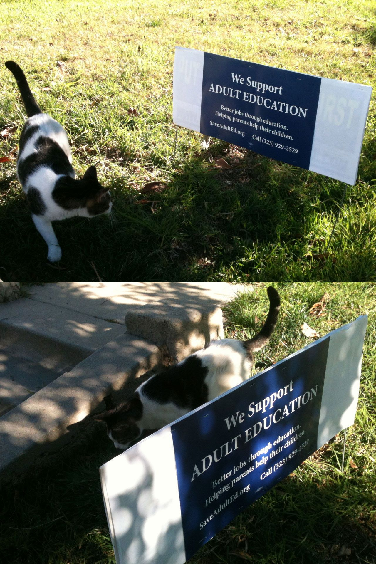 """We repurposed one of those racist """"put public safety first"""" signs into an awesome double sided """"We Support Adult Education"""" lawn sign for our front yard. One of our cats, Modo, is keeping watch over the sign."""