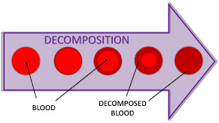 Textusa: Blood and the EVRD dog - Part 1  Blood%2Bdecomposition