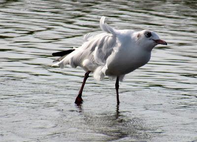 Aves en la Camarga
