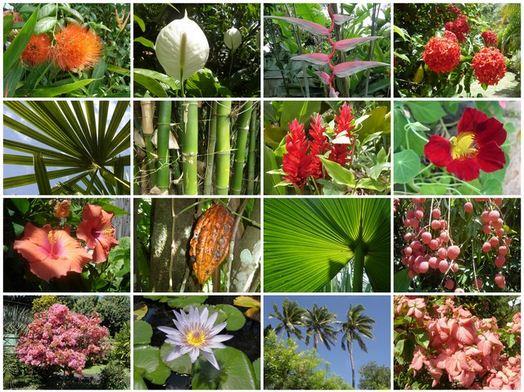 Faktorfaktor yang Mempengaruhi Peta Persebaran Flora Di