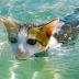 Rescuing Manis Sea Cat