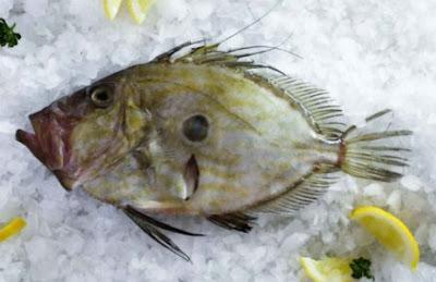 Manfaat Ikan Dori