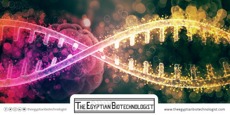 • خمس خطوات للتدرب على الهندسة الوراثية لدارسي التكنولوجيا الحيوية