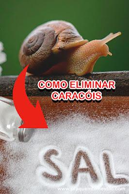 Espalhe sal para eliminar os caracóis