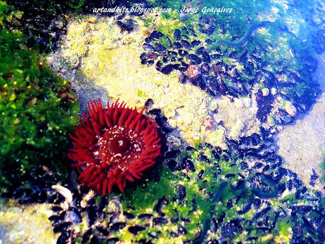 Cerca de 80% do oxigénio que respiramos é produzido nos oceanos... e contudo, continua a não haver políticas concertadas, à escala global, para que se evite uma acentuada e cada vez mais acelerada perda de biodiversidade, e o colapso de ecossistemas marinhos... / About 80% of the oxygen we breathe is produced in the oceans... and yet there are still no concerted policies, on a global scale, to prevent a sharp and increasingly accelerated loss of biodiversity, and the collapse of marine ecosystems...