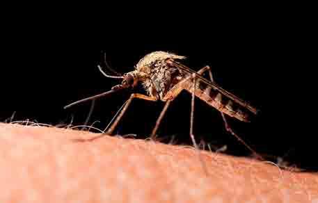 Primer caso humano de otro virus transmitido por mosquitos