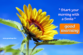 start your morning with smile! Good morning message with sun flowers