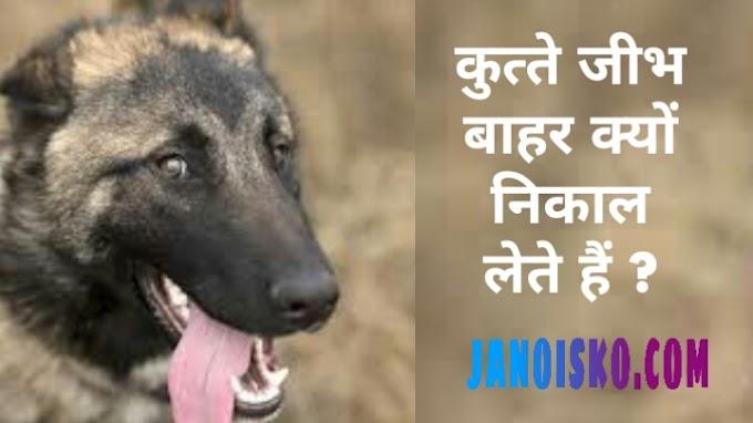 गर्मियों के मौसम में कुत्ते जीभ बाहर क्यों निकाल लेते हैं । कुत्ते जीभ बाहर क्यों निकाल लेते हैं  ?