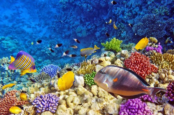 INDONESEA: Raja Ampat, Surga Dunia Bawah Laut Dari Tanah Timur Nusantara.