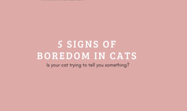 Signs of boredom in cats #infographic