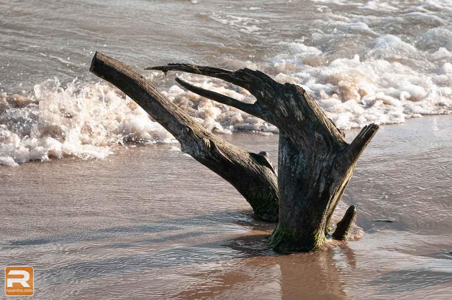 Koks kuru apskalo jūras ūdens