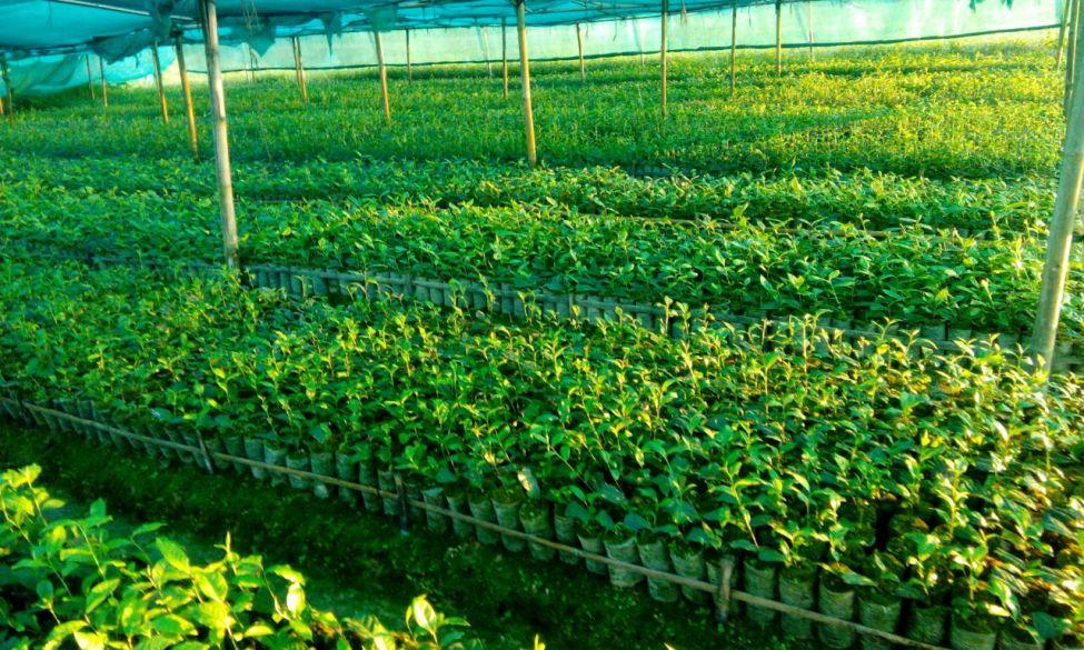 cinnamara-nursery