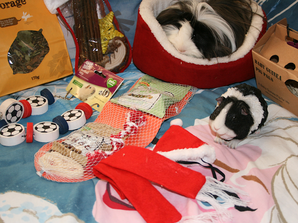 Sheldon's First Christmas ♡