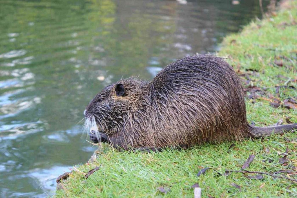 Beaver Pond Trail -- Summer