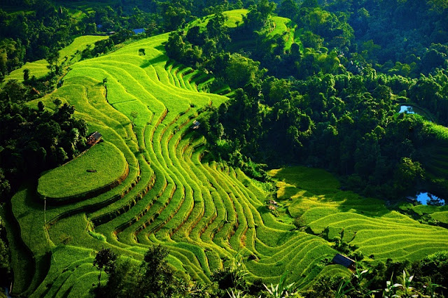 Spectacular Terraced Fields Near Hanoi 1