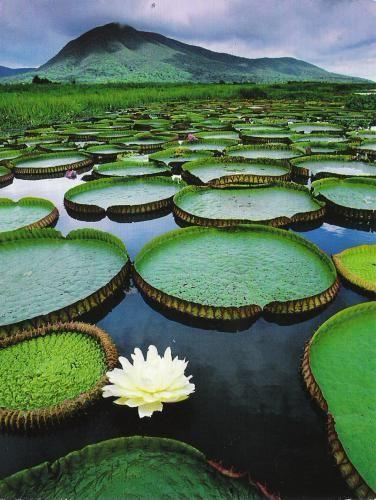 The Biota of Wetlands