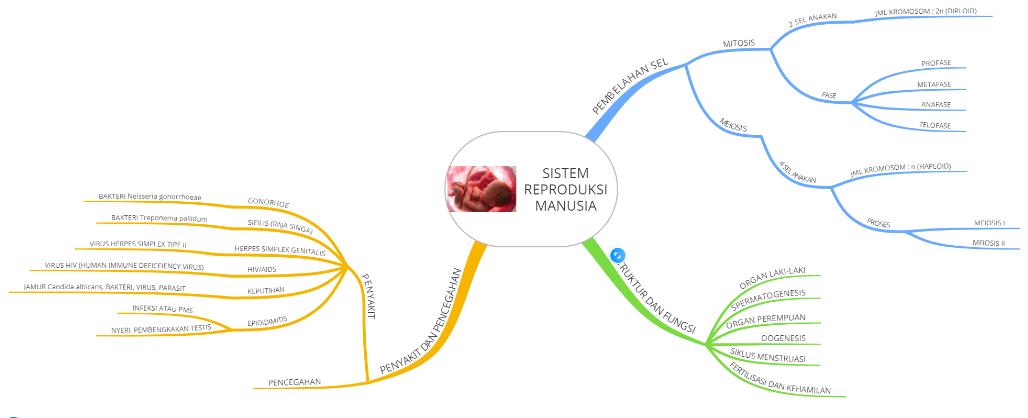 Mind Map Sistem Reproduksi Pada Manusia