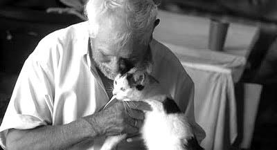 cuidados-especiales-del-gato-en-la-vejez-o-gato-anciano