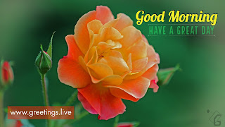 New good good-morning-wishes whats app images