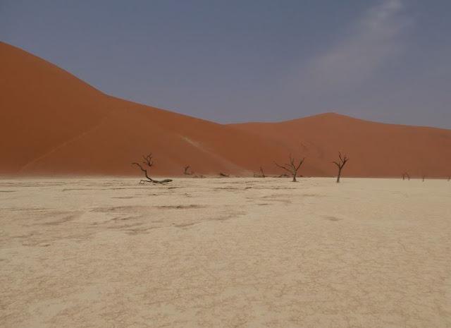 alberi a Dead vlei