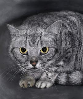 Posisi Kucing serta Arti dari Posisi Kucing