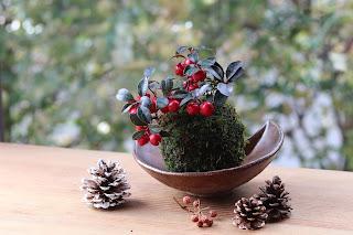 三日月型の鉢にのせたゴールテリア苔玉と大中小の松ぼっくりとサンキライの実