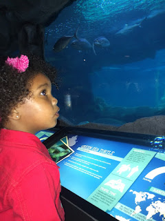 http://www.wem.ca/play/attractions-at-wem/marine-life