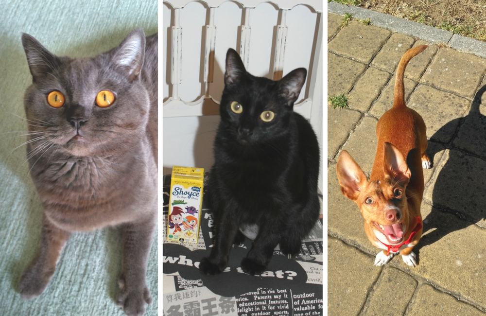 Blogue ela e ele, ele e ela+ animais de estimação + blogue português de casal + Pedro e Telma +Cão e gato + Klaus, Maria Preta e Chiclet