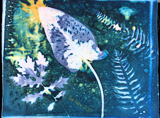 Wet Cyanotype_Sue Reno_Image 151
