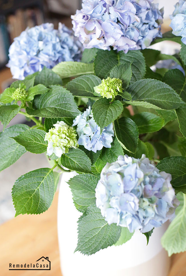 how to make hydrangeas to last long