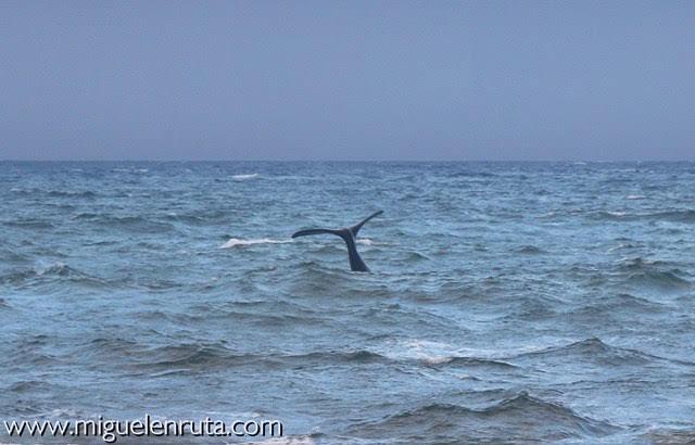 Cola-ballena-Sudáfrica