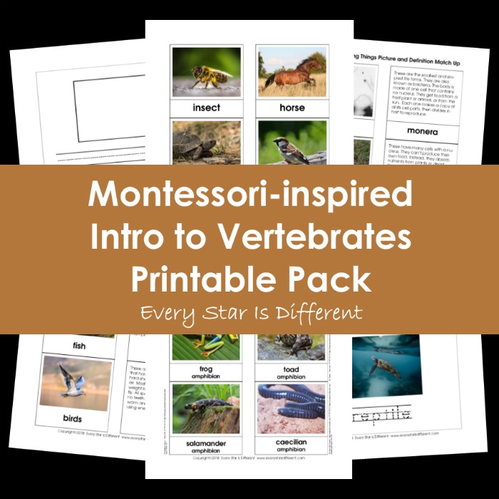 Montessori-inspired Intro to Vertebrates Printable Pack