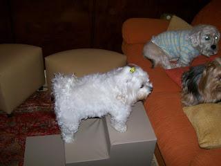 disfunção renal em cães