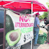 Agricultor vende el kilo de aguacate en 20 pesos, sin intermediarios.