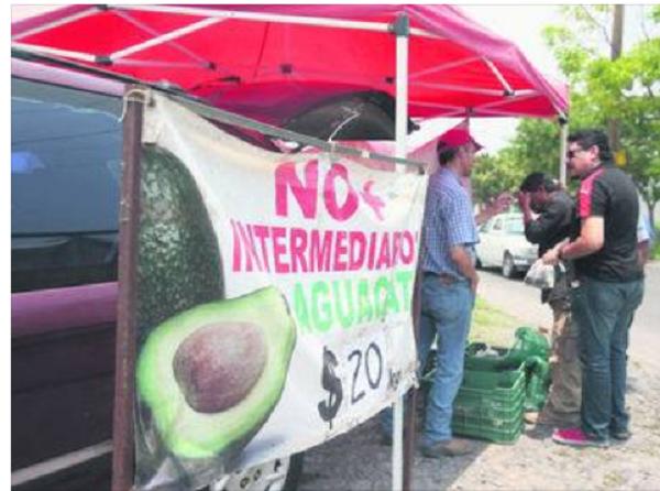 Campesino mexicano vende el kilo de aguacate en 20 pesos, sin intermediarios. DIFUNDE!!