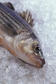balık-hastalikbelirtileri.net