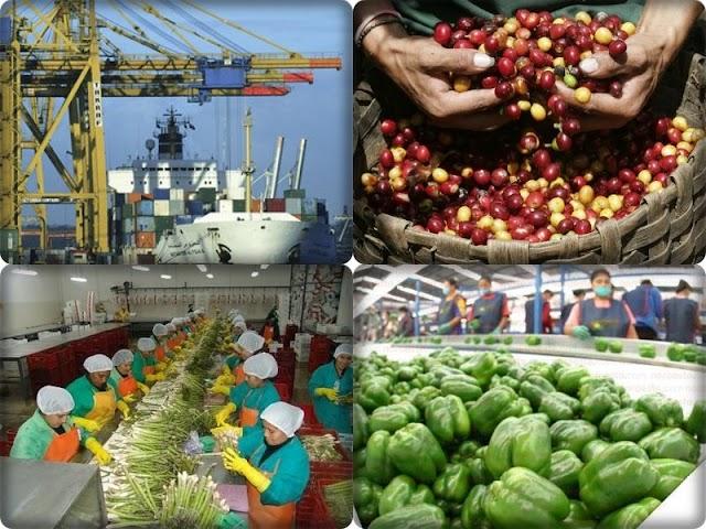 Exportaciones y desarrollo económico