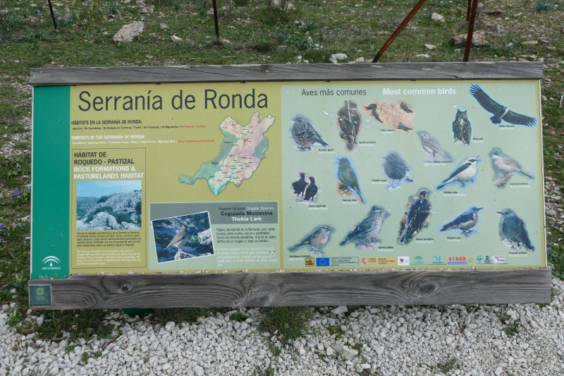 Panel interpretativo aves Serranía de Ronda. AEA Bosque Animado.