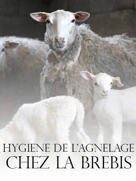 HYGIENE DE L'AGNELAGE  (BREBIS) - WWW.VETBOOKSTORE.COM