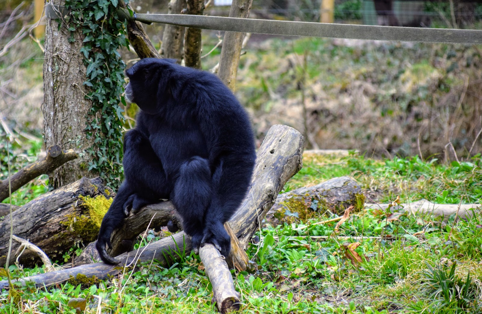 , Days Out Pembrokeshire: Manor Wildlife Park, March 2018