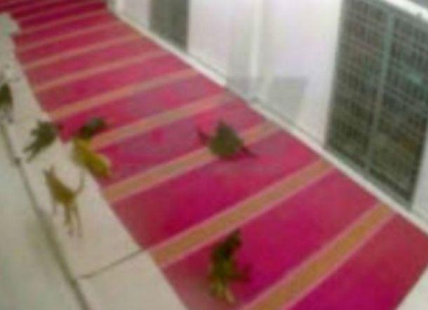 8 Ekor Anjing Mendadak Ada di dalam Masjid